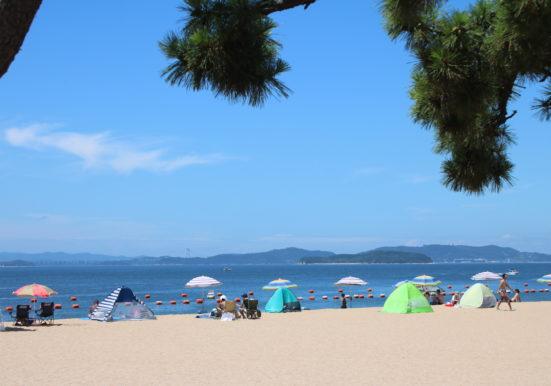 松林からみる渋川海岸