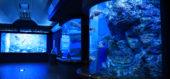 幻想的な雰囲気の水槽