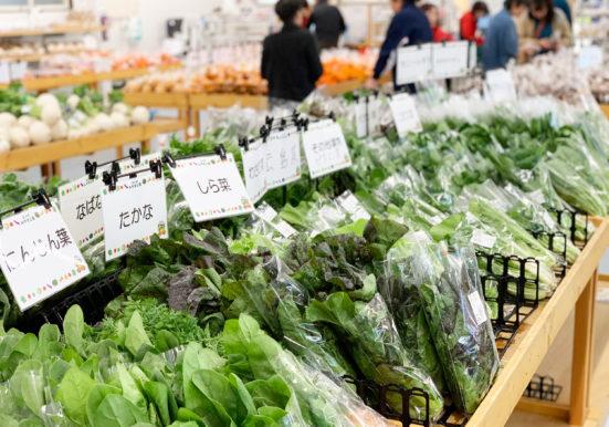 ぎっしり並べられた葉物野菜