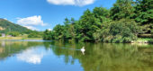 白鳥と鯉が優雅に泳ぐ赤松池