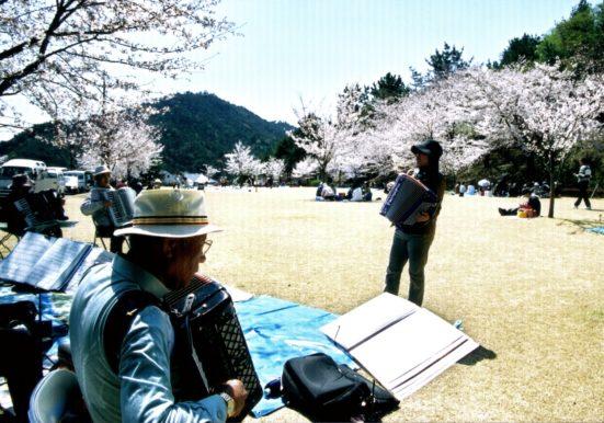 桜の花の下メロディは流れる