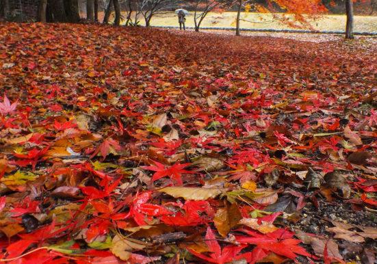 雨の紅葉谷