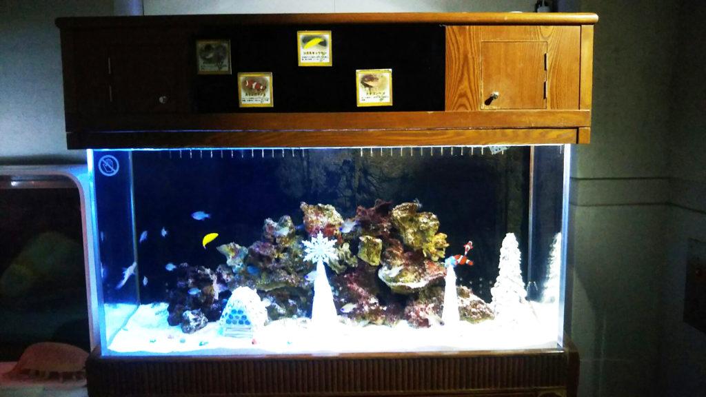 展示されたクリスマス水槽
