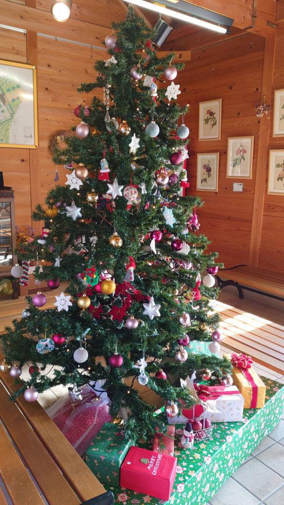 イギリス庭園内に設置したクリスマスツリー
